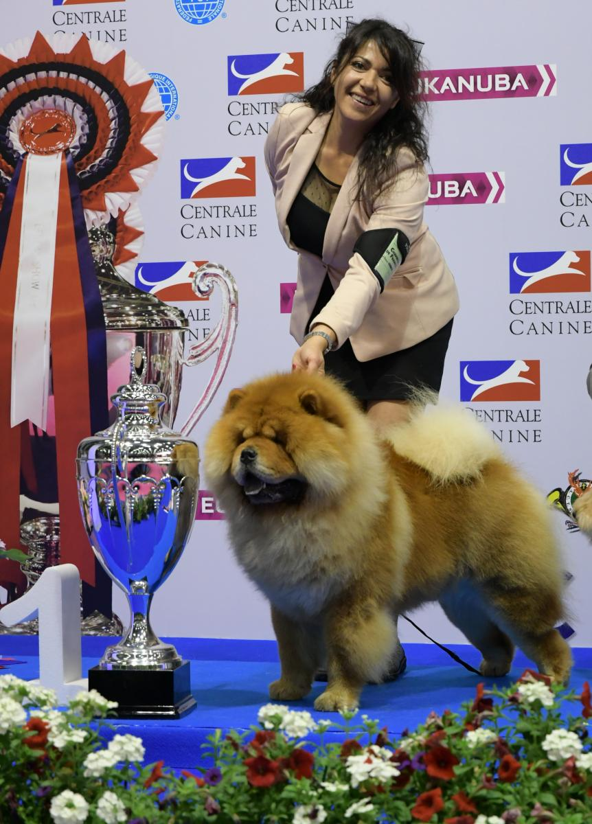 chow chow best in show