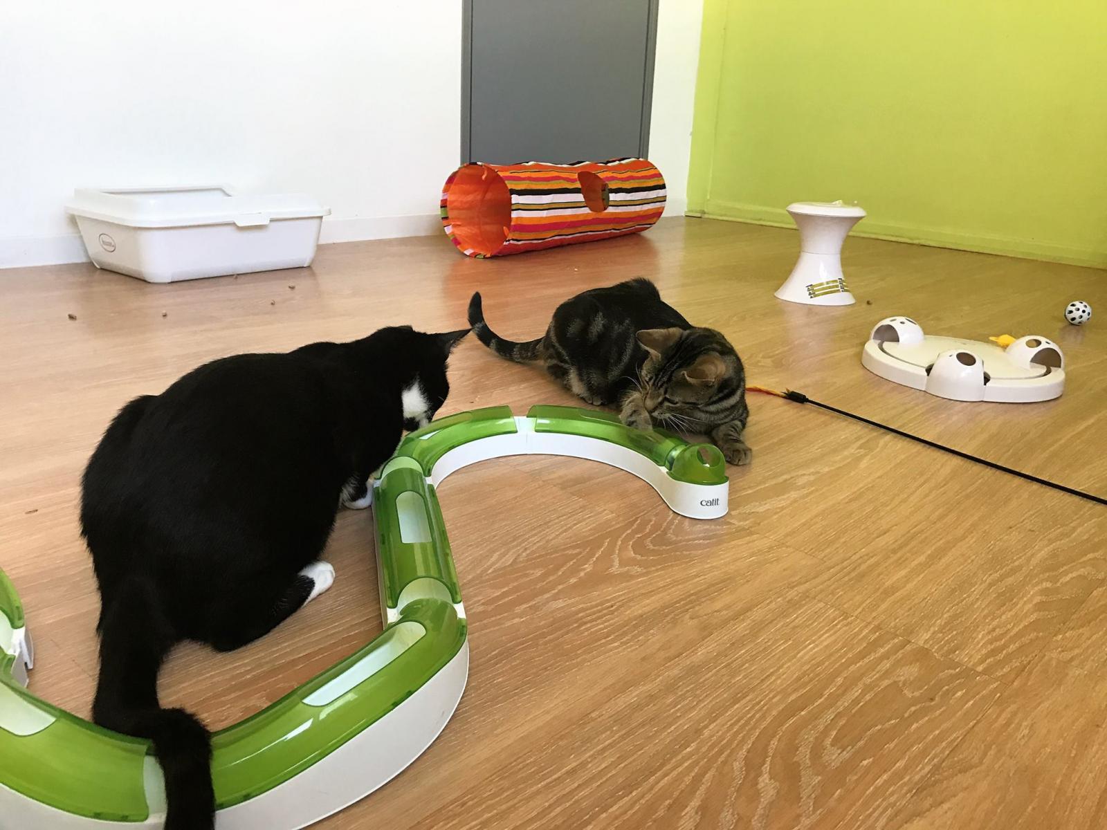 le jardin des chats