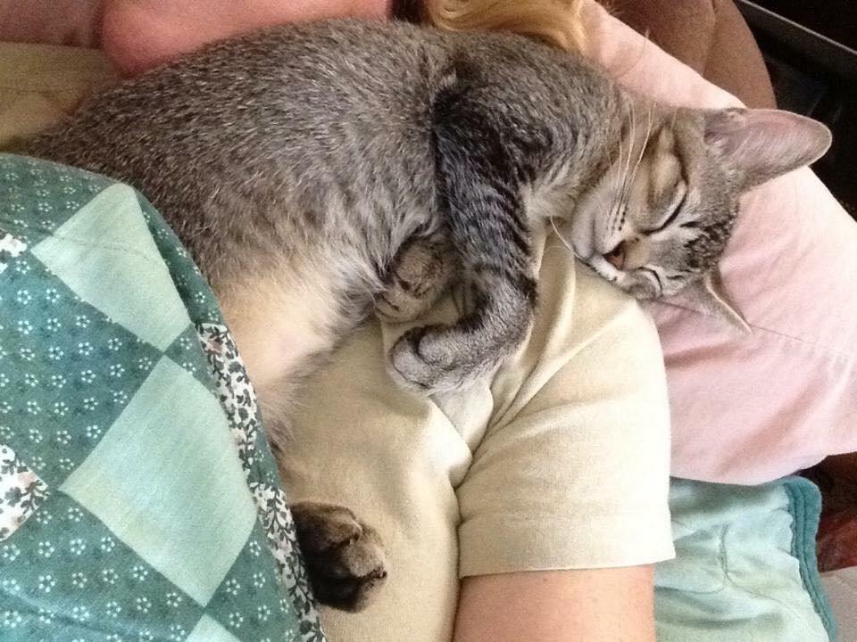 julie chatte soldat