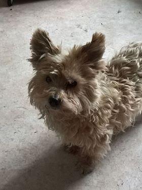 karamel vieux chien