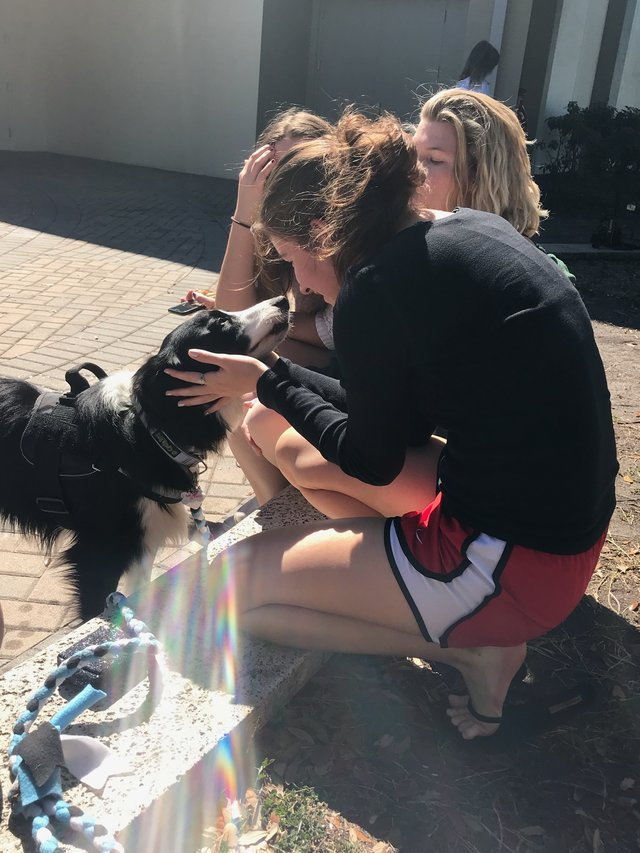 kermit chien de thérapie