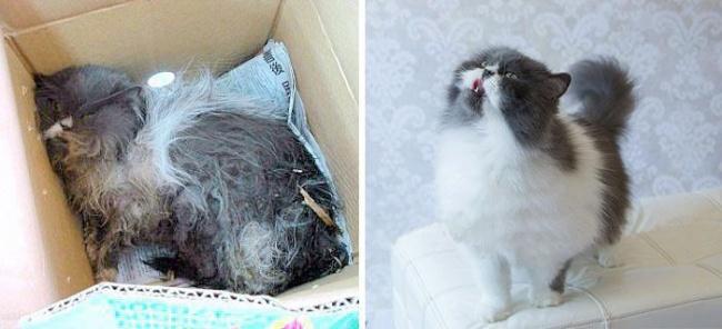 chats métamorphosés par l'adoption