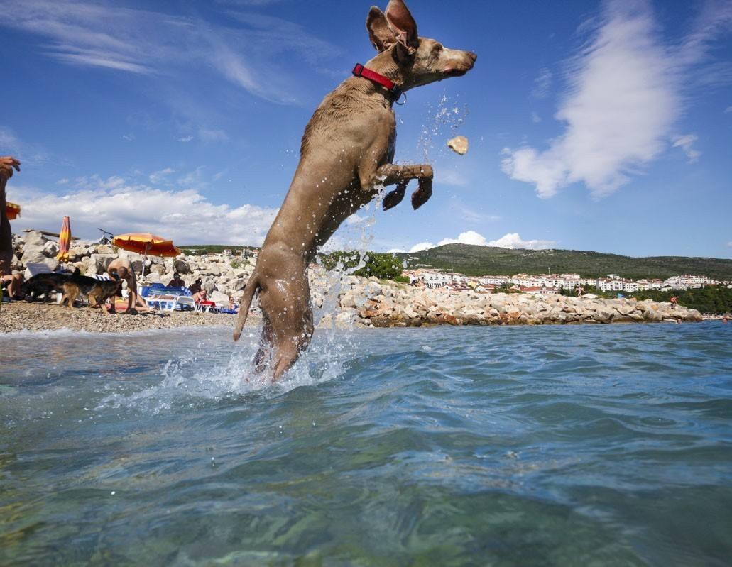 monty's dog beach