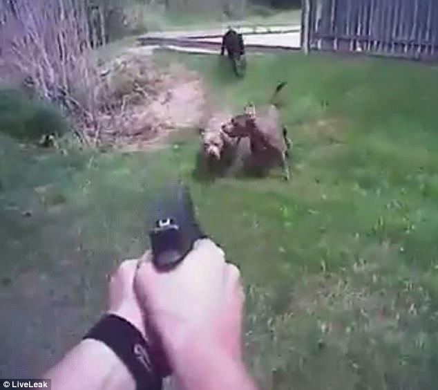 ohio chien tué police