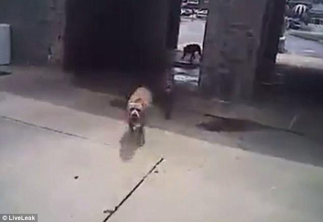 chien tué ohio police