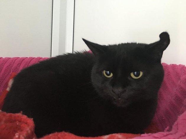 raphael chat noir