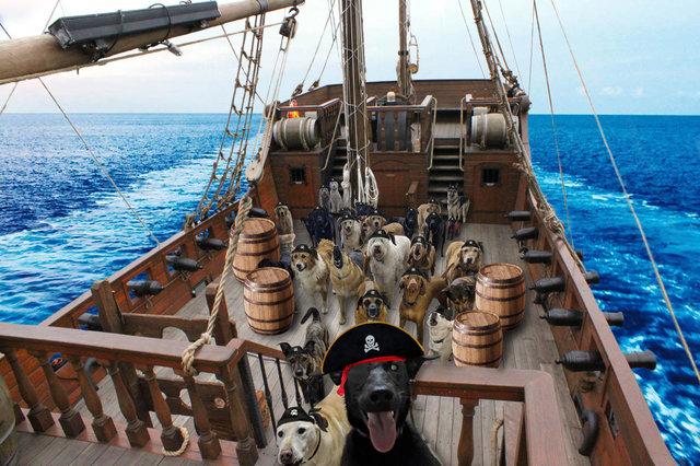 selfie chien montage pirates