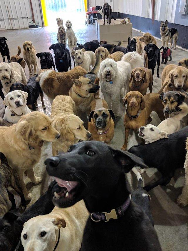 selfie chiens