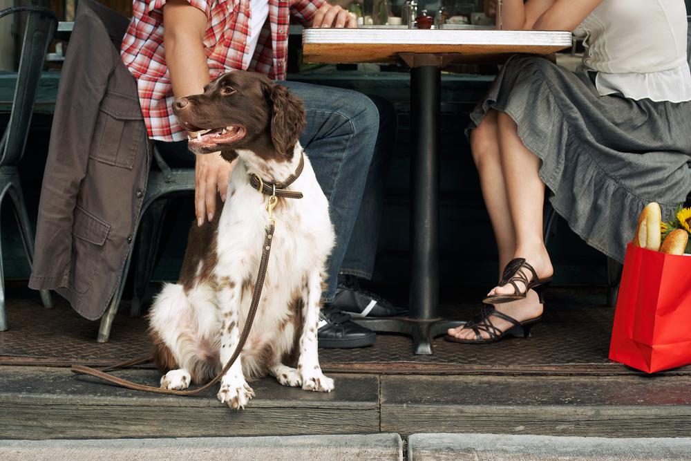 chien restaurant