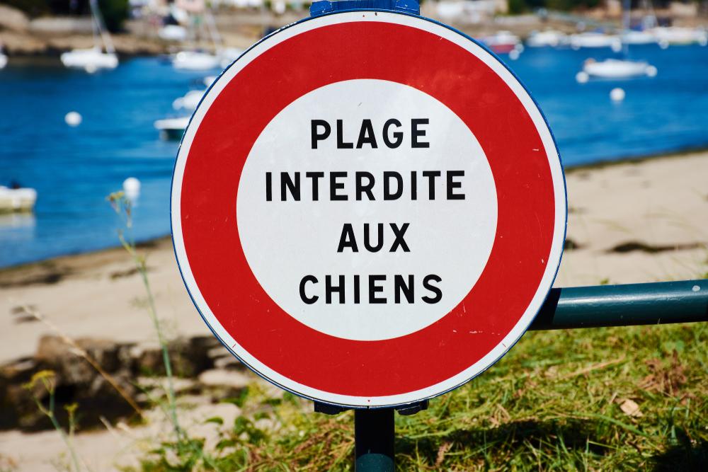 plage interdite aux chiens