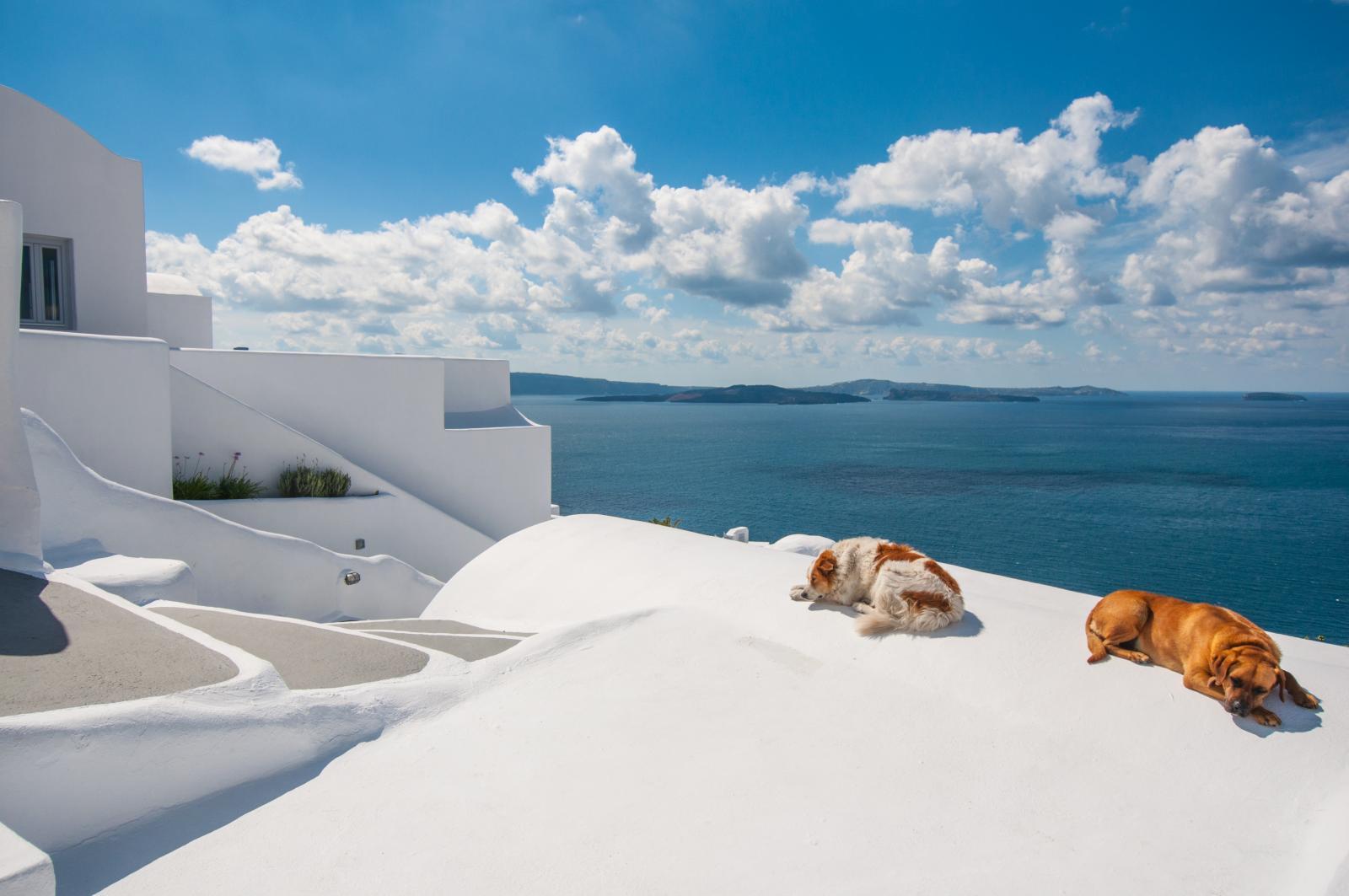 grece chien