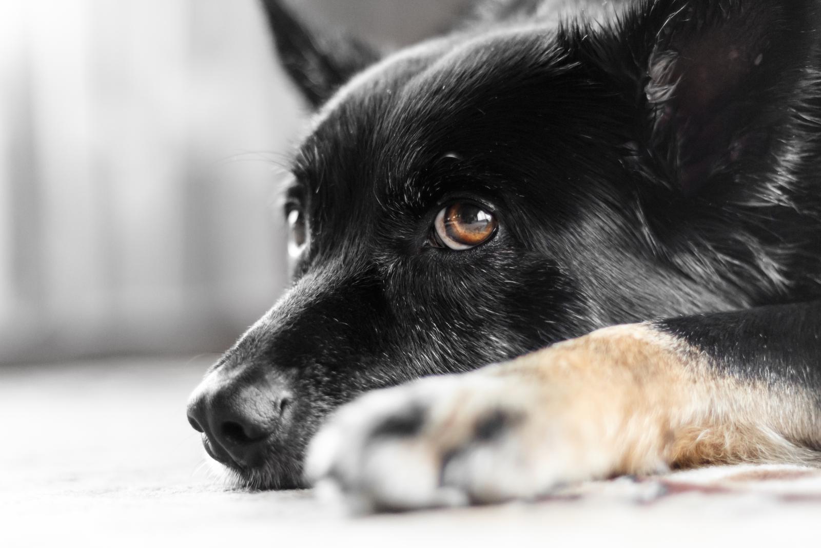chien noir abandonné