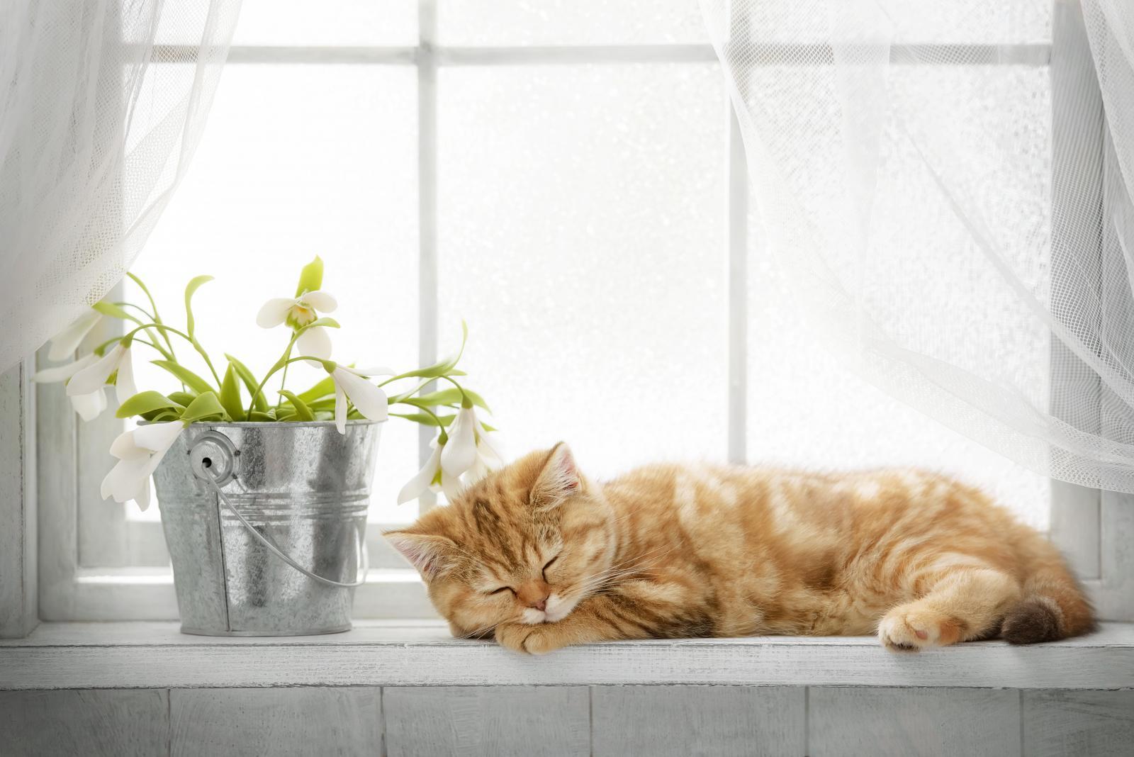 printemps chat