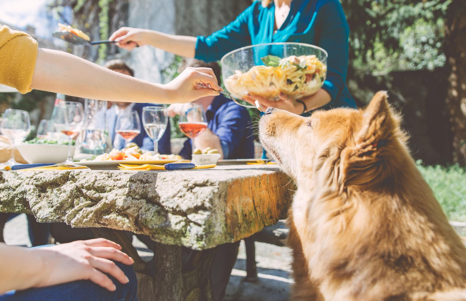 chien table barbecue