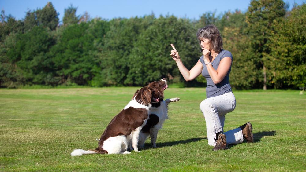 educateur canin