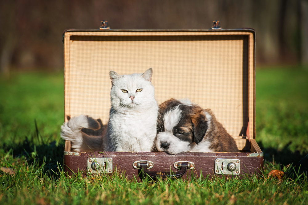 chien chat valise
