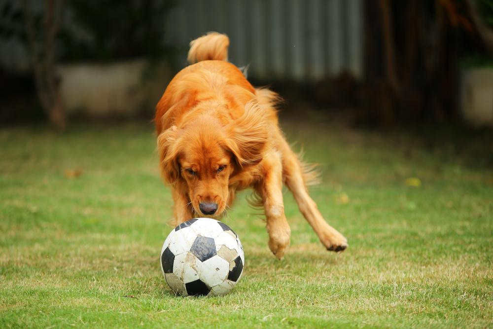 foot chien