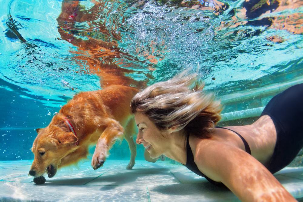 nage chien