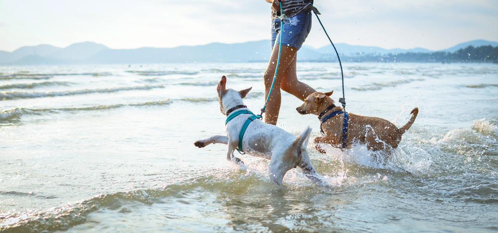 plage vacances chien
