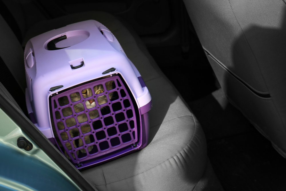 chat cage de transport voiture