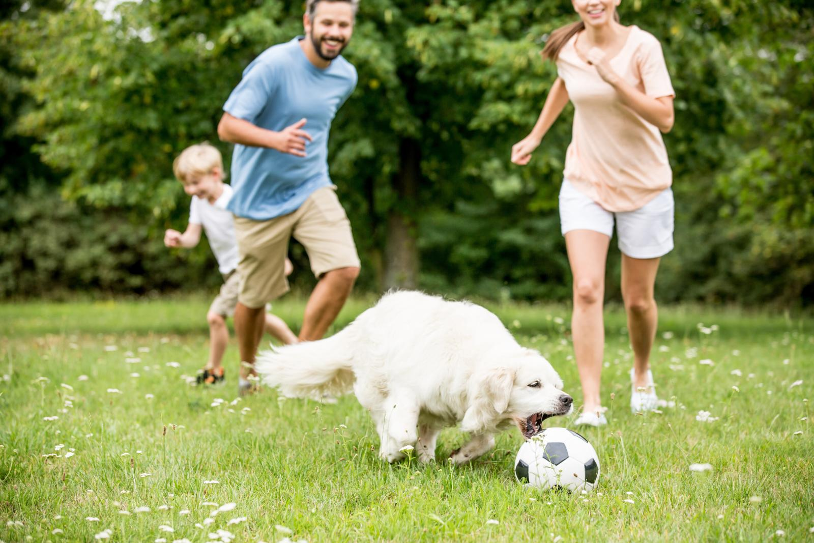 chien football