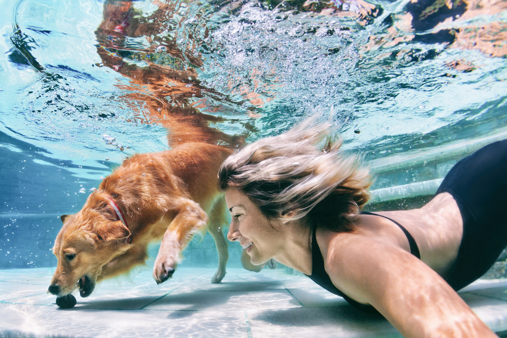 chien piscine