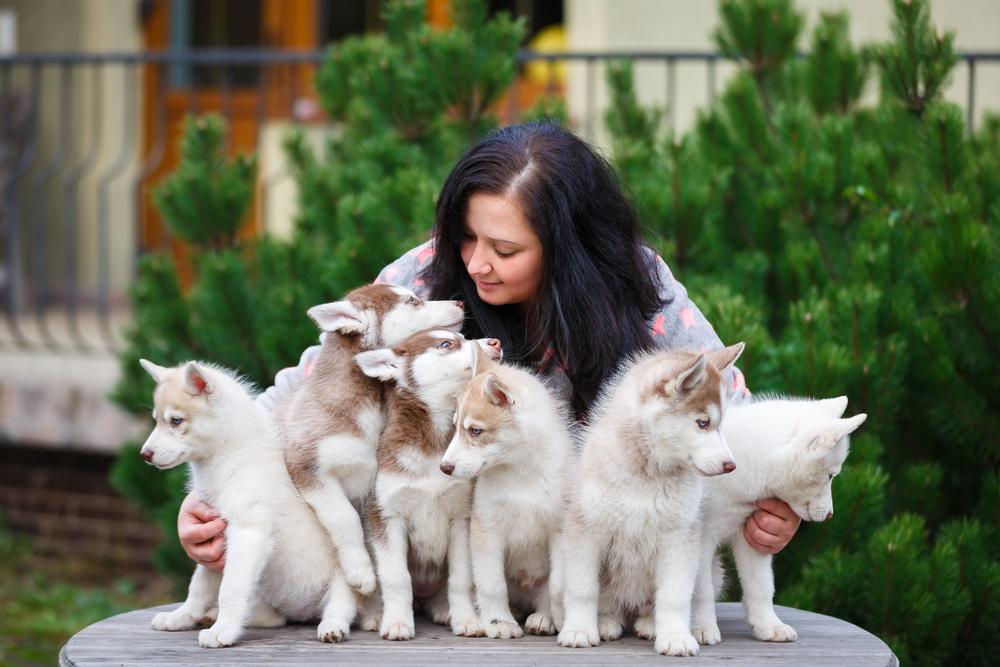 éleveur de chiens