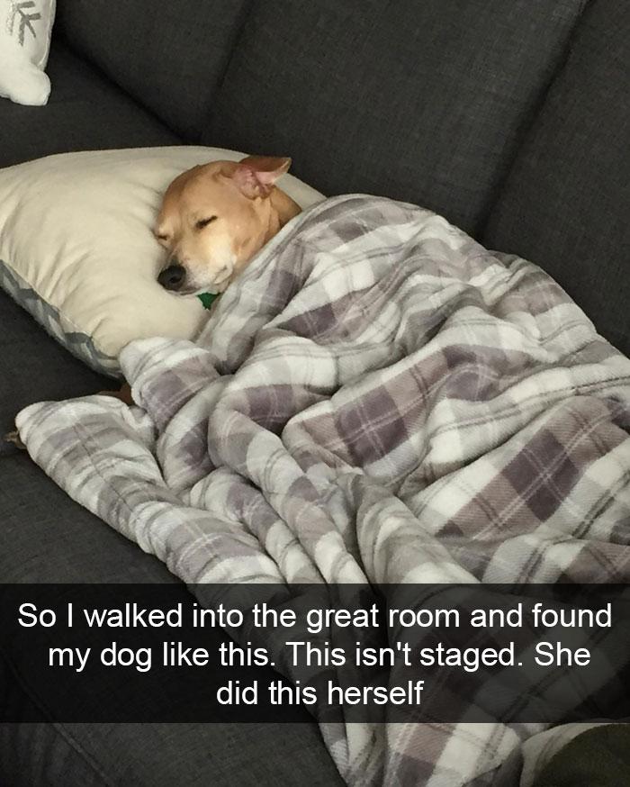 snap chien
