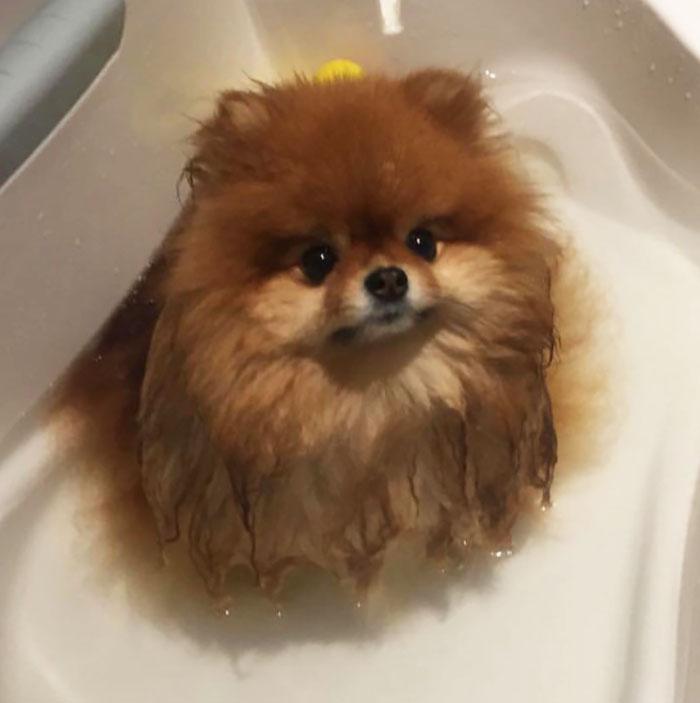Spitz bain