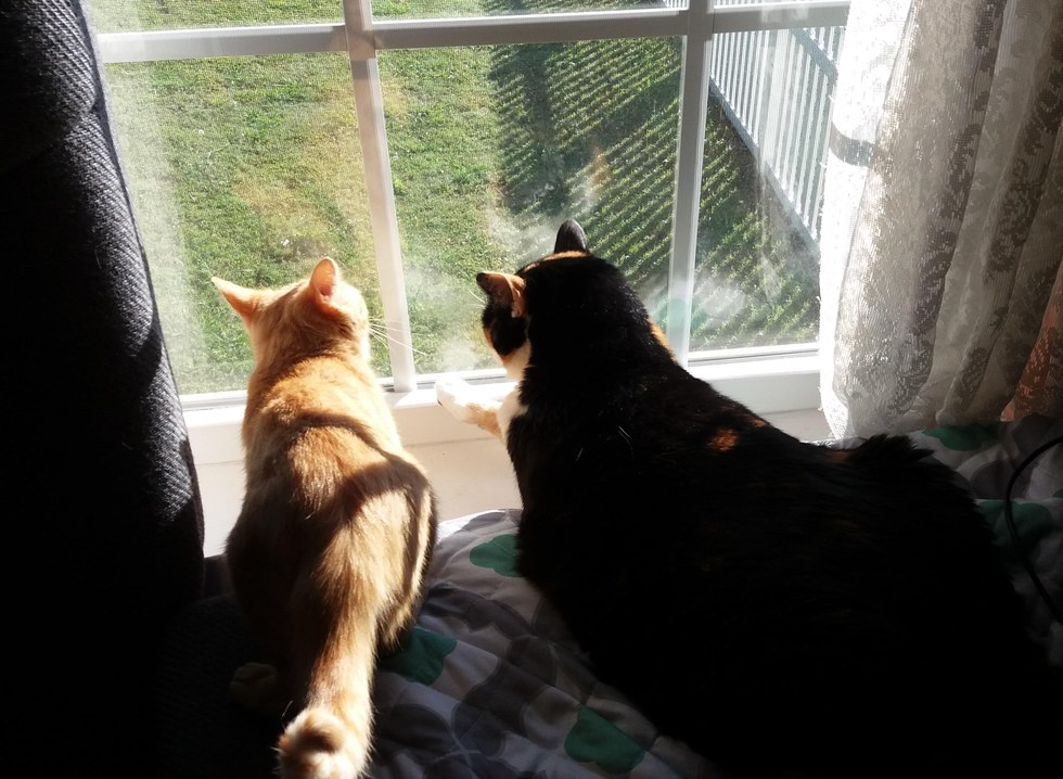 Sunny chat