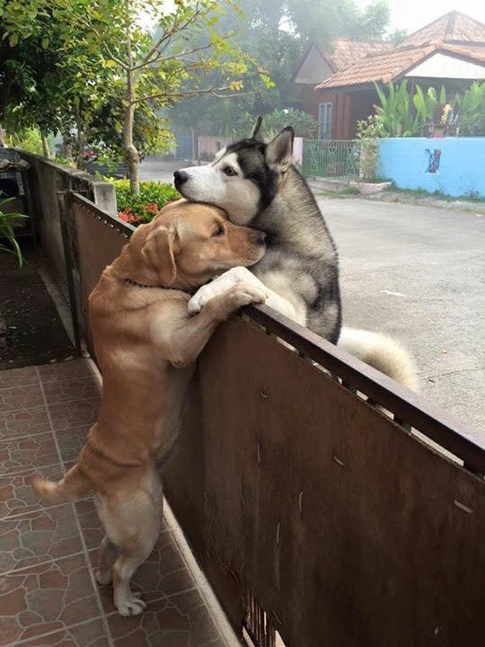 chiens bisou