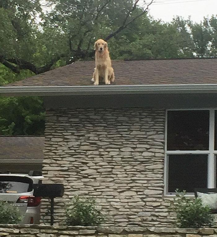 chien toit