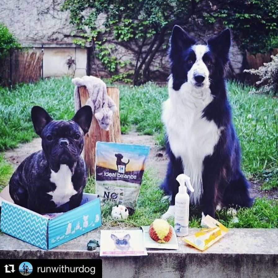 wamiz box instagram chien