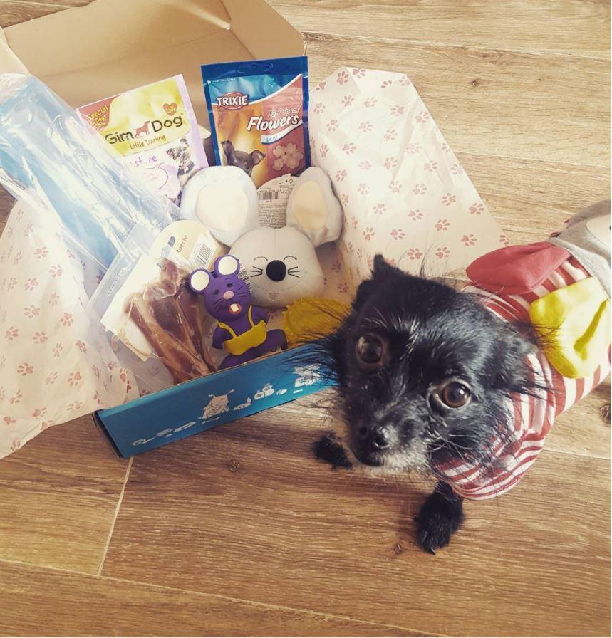 wamiz box chien instagram