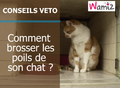 Comment brosser les poils de son chat ?
