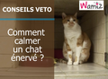 Comment calmer un chat agressif ?