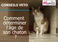 Comment connaitre l'âge d'un chaton ?