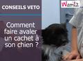 Comment donner un médicament à son chien ?