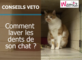 Comment laver les dents de son chat ?