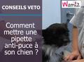 Comment appliquer un anti-puce à son chien ?