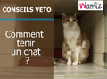 Comment tenir son chat ?