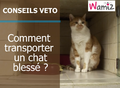 Comment transporter un chat blessé ?