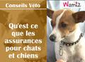 Une assurance santé pour mon chien ?
