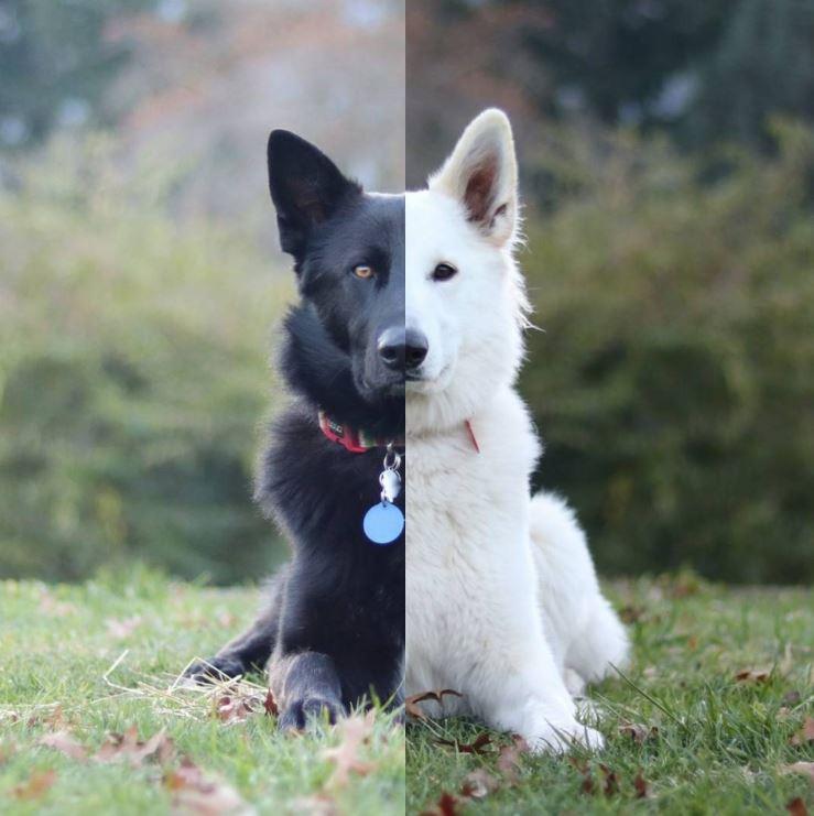 Les photos de « mariage » de ces deux chiens vont vous faire craquer