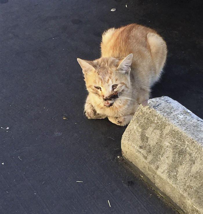 Mister Pickle chat blessé par une voiture
