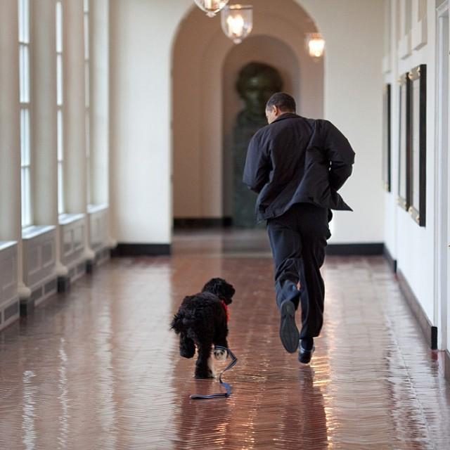 barack obama court avec bo