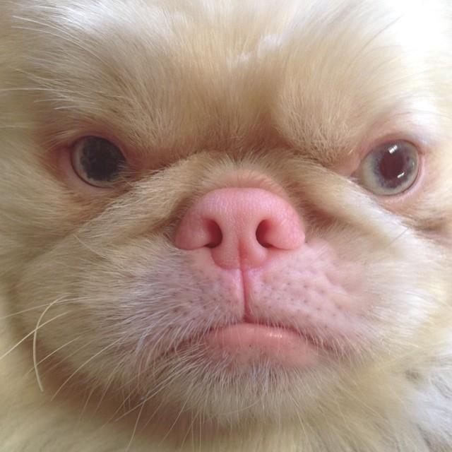 grumpy dog blue monday