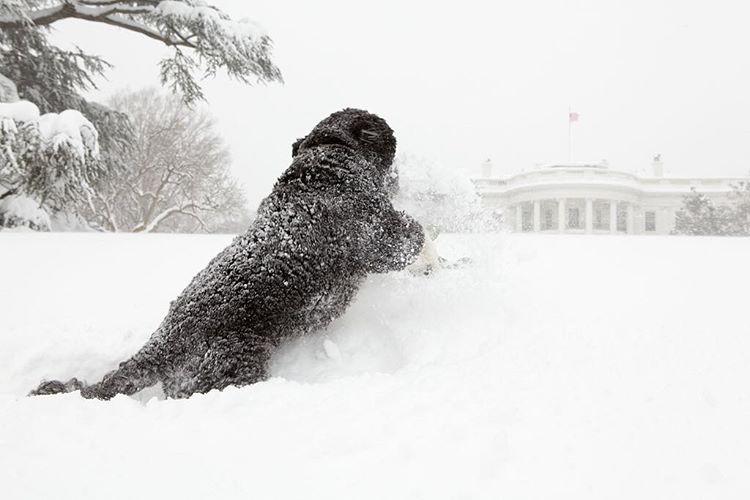 bo dans la neige