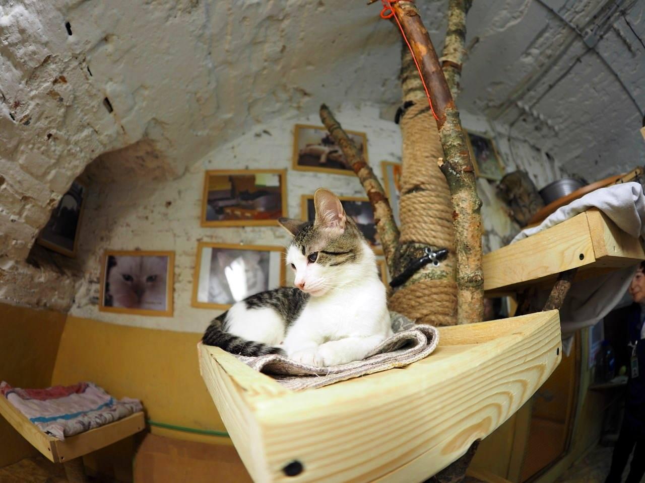 chats du musée de l'ermitage de saint-pétersbourg