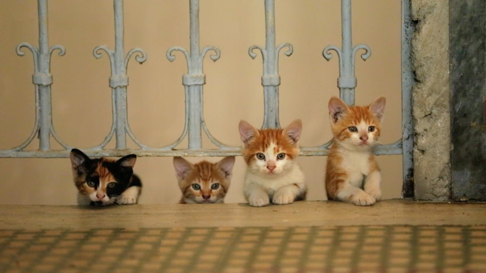 chatons istanbul
